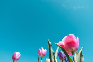 het voorjaar en celzouten